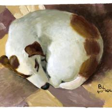Benson's Sleeping Puppy