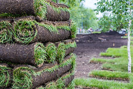 Stack of turf grass for lawn. Carpet of