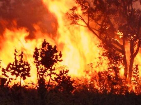 O impacto das queimadas