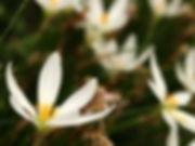 IMG_1753_edited.jpg
