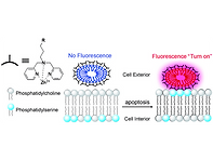 2013(Turn‐on fluorescence detection of a
