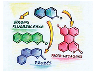 2015(π-Expanded coumarins synthesis, opt
