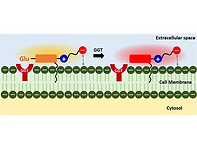 2020(Cell-Membrane-Localizing, Two-Photo