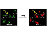 2017(a two photon fluorescent probe for