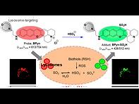 2019(A Benzopyronin-Based Two-Photon Flu