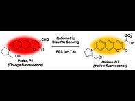 2018(A benzocoumarin based two-photon fl