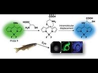 2015(Ratiometric fluorescence detection