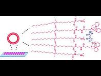 2011(Zinc (II)‐Dipicolylamine‐Functional