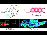 2012(In vivo two-photon fluorescent imag