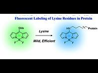 2017(fluorescent labeling of lysine resi