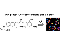 2017(two photon fluorescent probe for hy