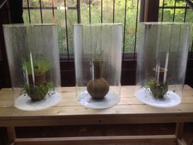 Transitory Nature of Earthly Joy: Karekimata Project