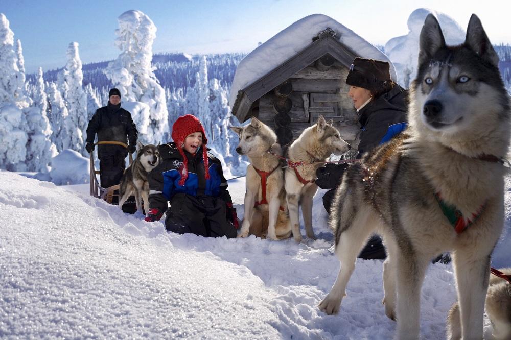 huskies-family-lapland-safaris-rovaniemi-1