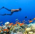 15240_Soneva - Underwater.jpg