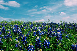 Texas Tech University Health Science Center