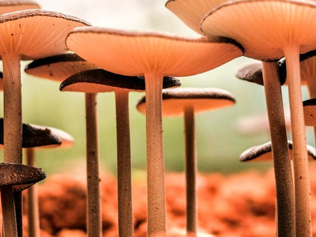 Conscious Leather Pt 1 | Bolt Threads |  Mushrooms