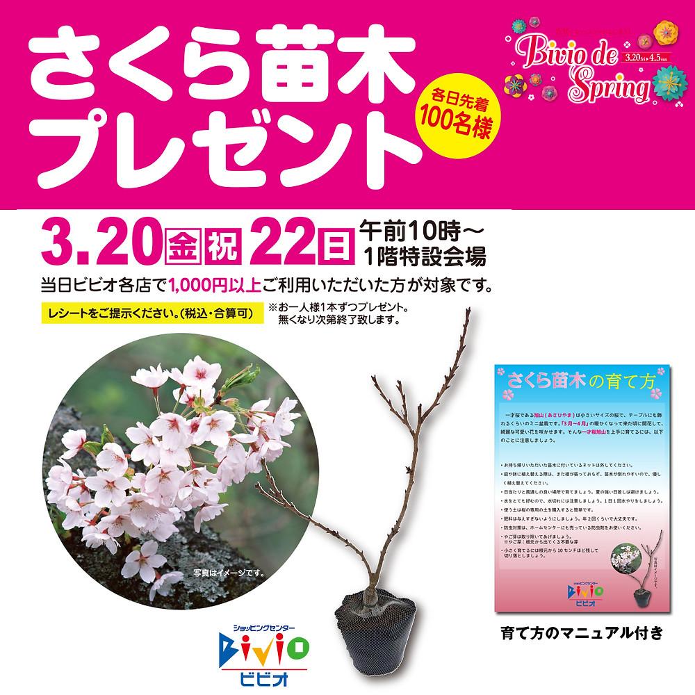 桜の苗木プレゼント