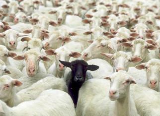 Bah Bah Black Sheep, The Screwloose Letters, Vol 1, #10