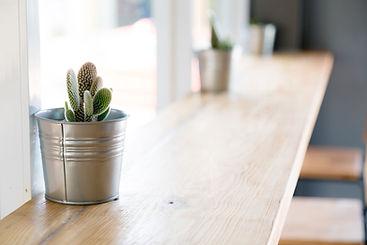 선인장 식물