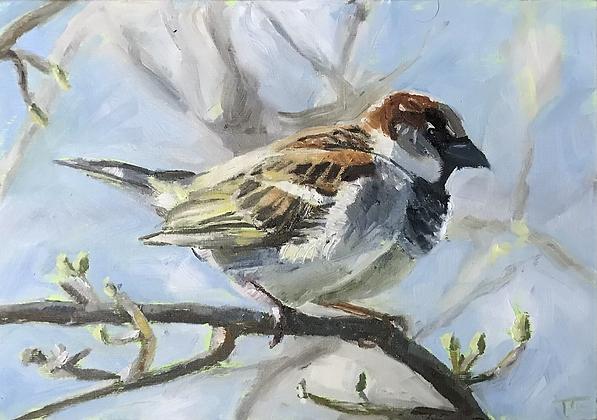 Sky blue sparrow