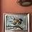 Thumbnail: Sky blue sparrow