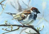 sky blue sparrow.jpeg
