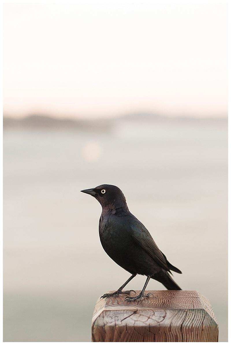 "When the ""Little Bird"" Lands in San Francisco"