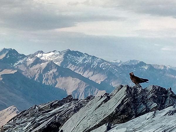 WWT -- photo -- kea atop Mt Crighton 011