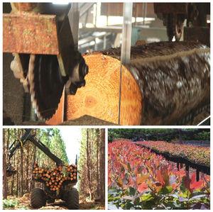 Madeira serrada eucalipto, pinus em Goiás e Brasilia