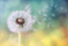 Picaluna Funerals | Kathryn Breusch_2.jp