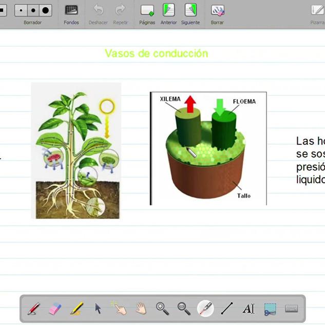 Así aprendemos sobre las plantas