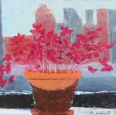 plant on city windowsill