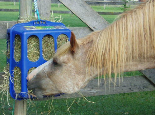 system horse product hay feeder fencing large feeders slow