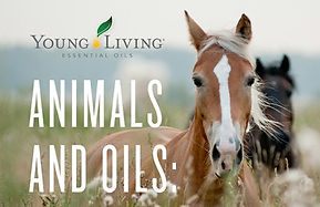 horses-and-oils.jpg
