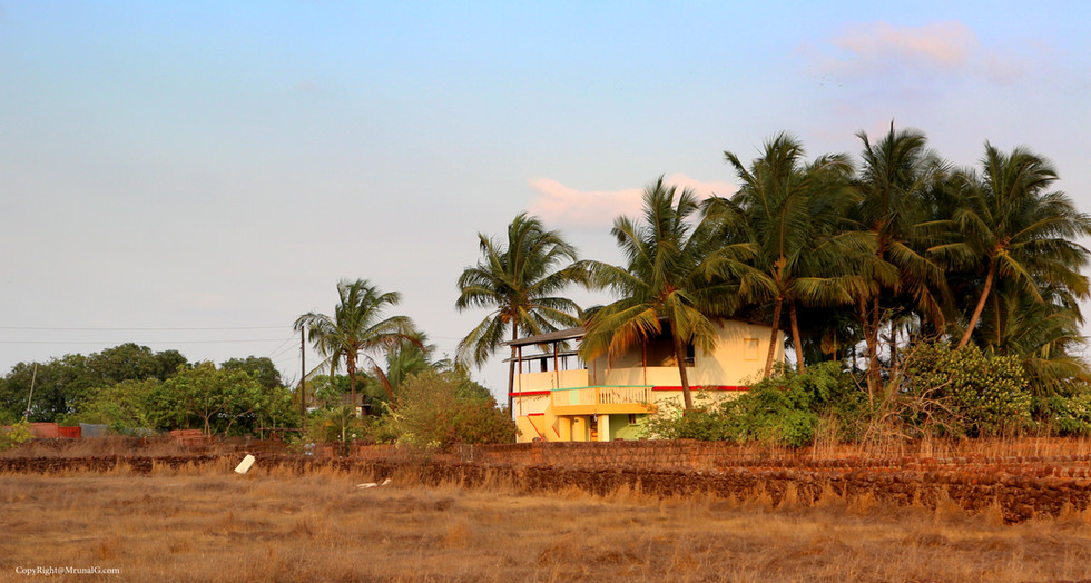 Coconut trees are very common in most independent houses.