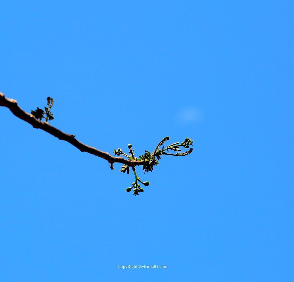 Budding reaching for sky