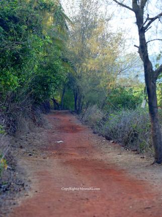 Small dusty road to group of houses next to Taramumbari Bhatvadi shallow water area.