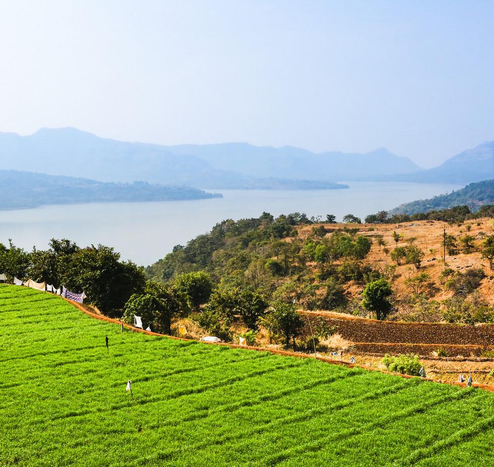 Farm fields at the Mulshi lake