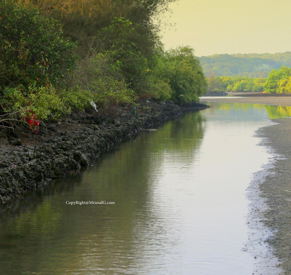 7.4 creek water during low tide at Taramumbri