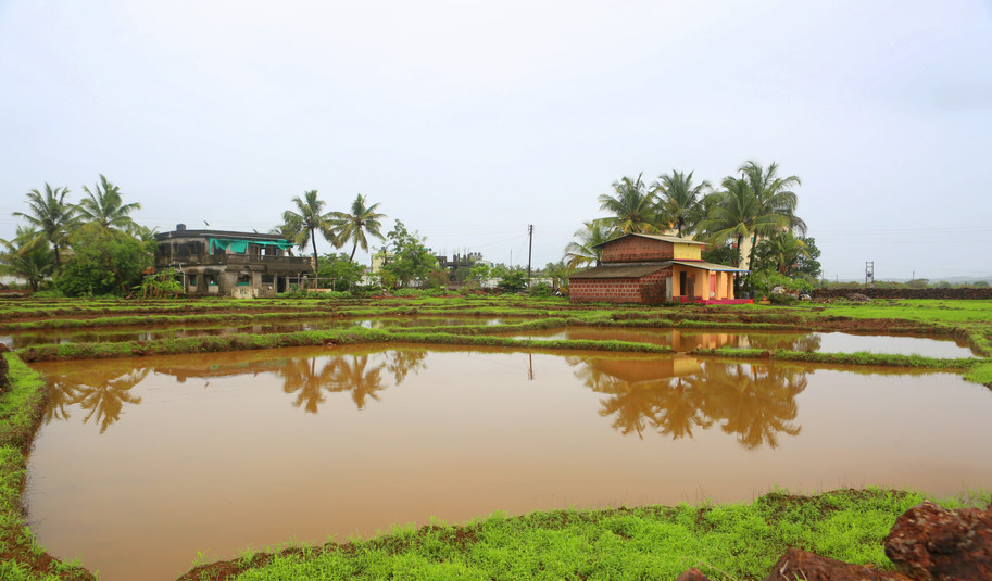 Paddy fields with water