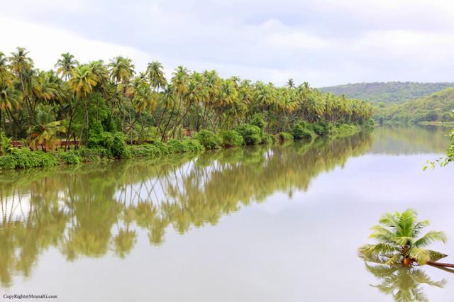 7.14 Coconut plantations at Tembavli river side