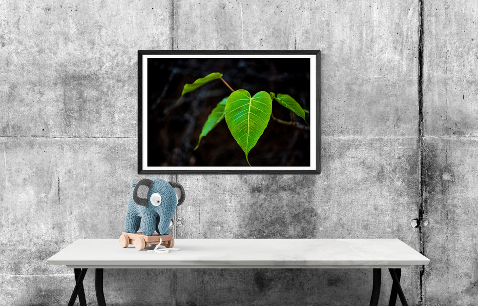 padvane-leaf-2-land.jpg