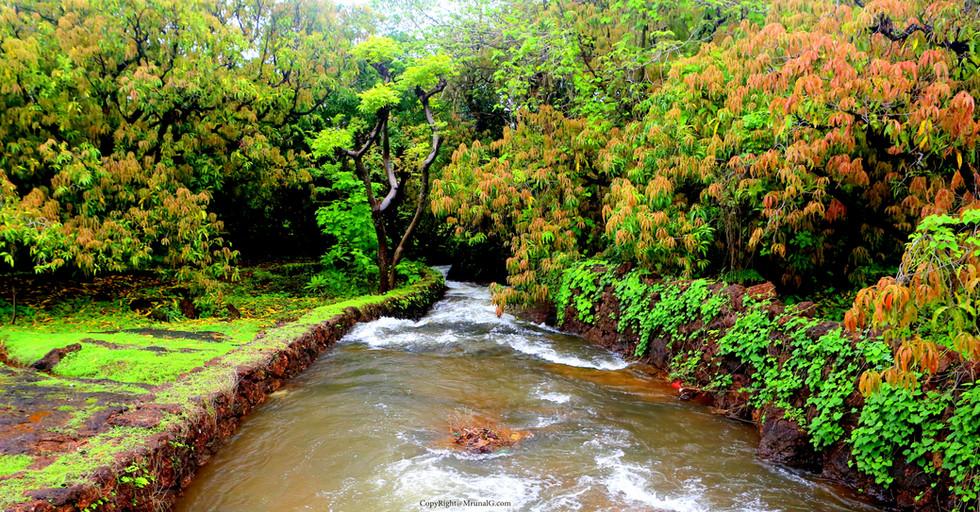7.2 Water stream behind Sarita hospital