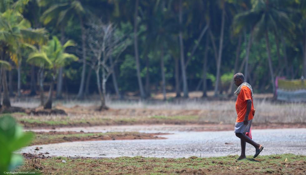 An old man walking in the Bhatvadi area water area