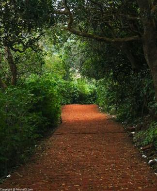 Path to the Elephant point Mahabaleshwar
