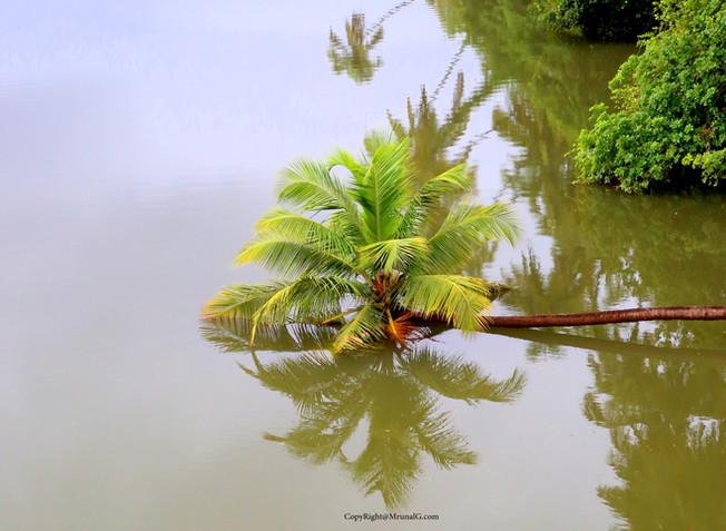 7.19 Tembvli river coconut rest