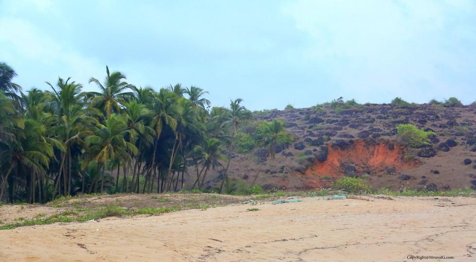 3.48 The coconut plantations and hill next to the Taramumbri beach