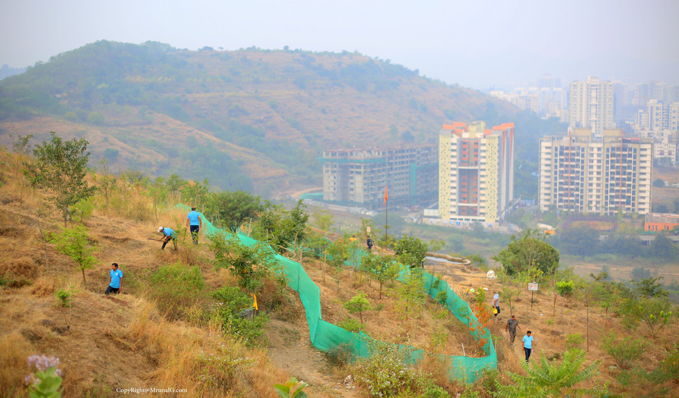 Citizens planting trees at the Baner hills