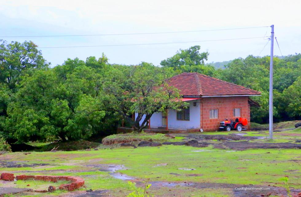 A farm house on a mango orchard.