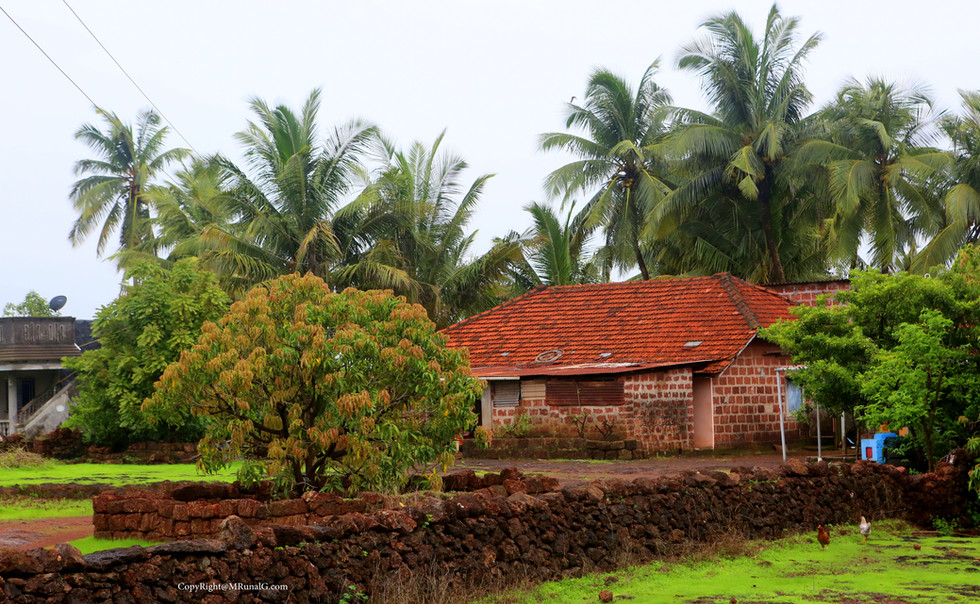 A typical housing setting with coconut trees and mango trees around in the yard.
